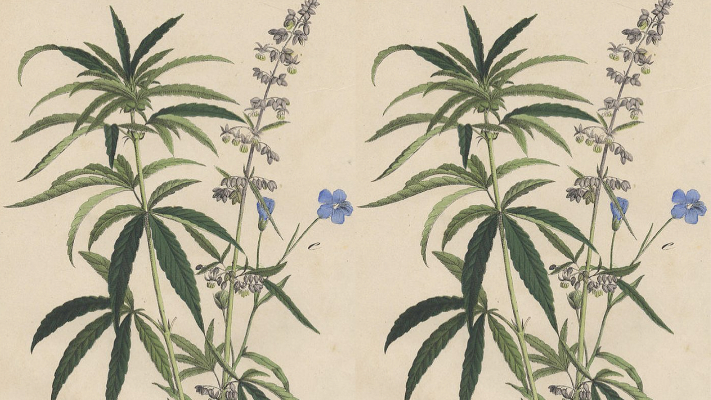 The Healing Way of Looking at Weed